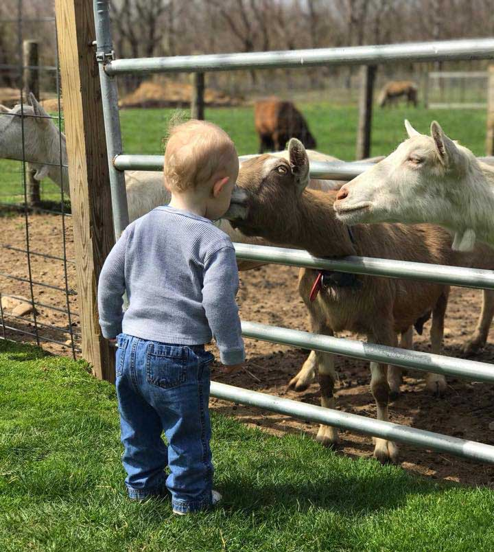 Catapano Dairy Farm Baby with a goat
